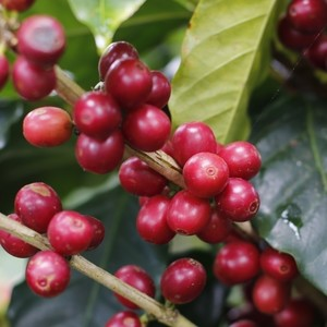 Colombia Tequendama SW Decaf