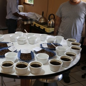 El Salvador Finca San Francisco Pacamara Honey
